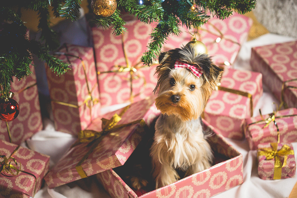 Blogmas post on all the items that I have on my Christmas wish list. You can also look at this cute dog too | Naomi 'N Doll